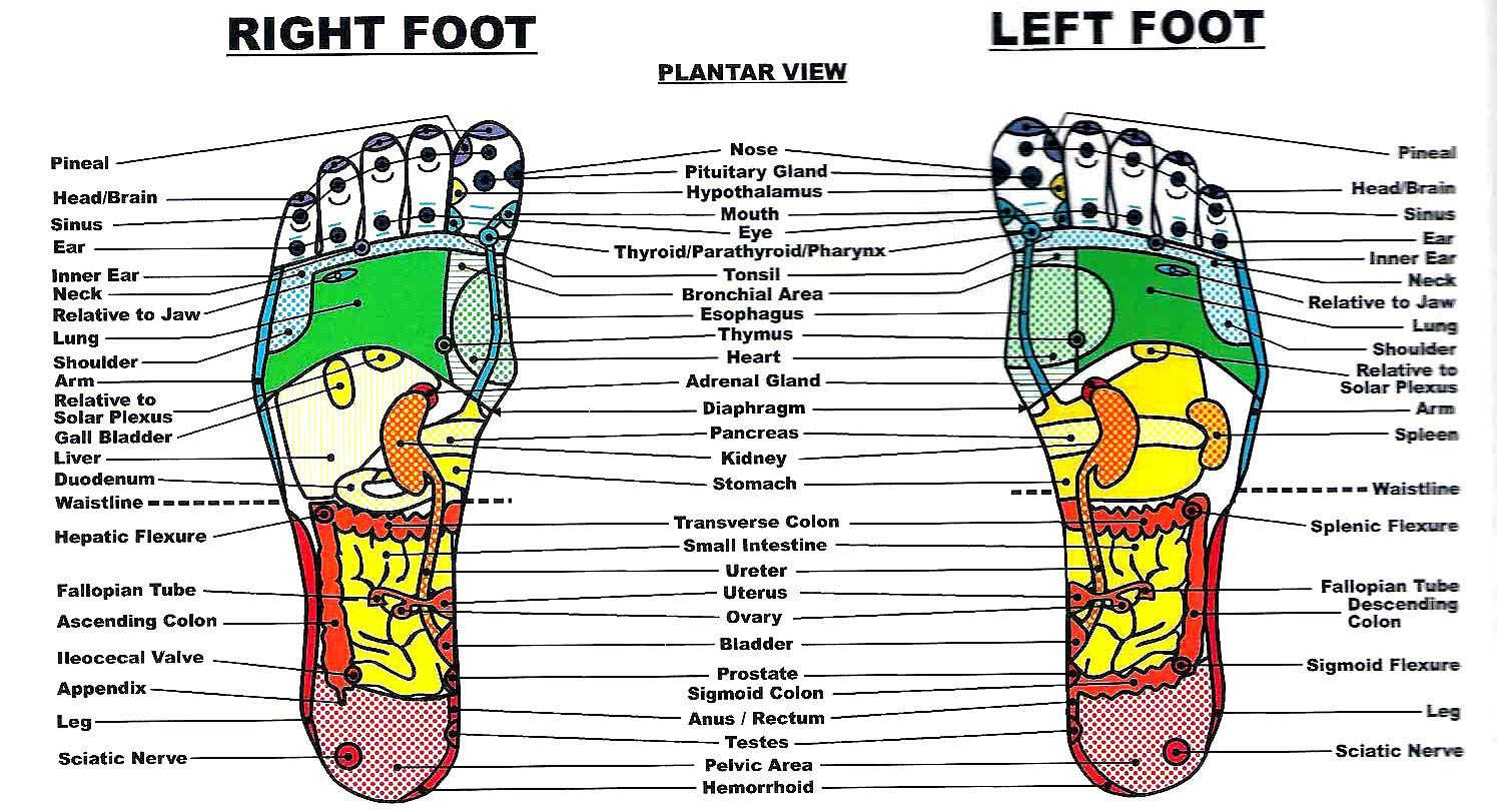 Reflexology - I'm a firm believer in this because I know for a fact it works!  I will have Cas give me foot massages, applying pressure according to this chart and it WILL relieve sinus pain, sciatic nerve pain, shoulder, neck, tummy, etc.  It DOES work!
