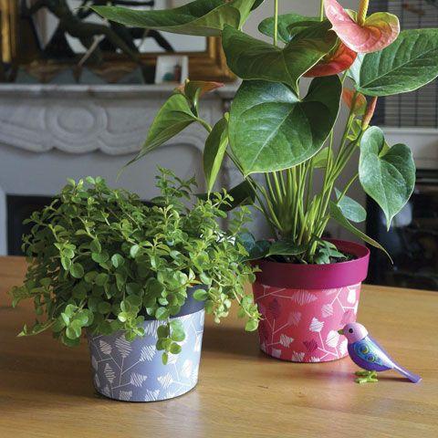 cam l on les pots cam l ons sont habill s avec 8 motifs tr s tendance plantes en int rieur. Black Bedroom Furniture Sets. Home Design Ideas