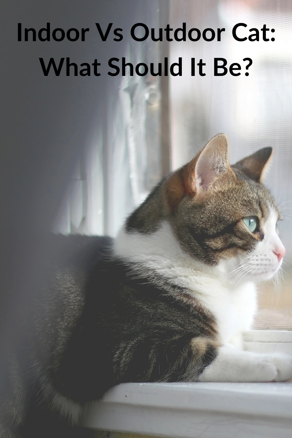Indoor Vs Outdoor Cat What Should It Be Ultimate Pet Nutrition Cats Outdoor Cats Can Your Pet