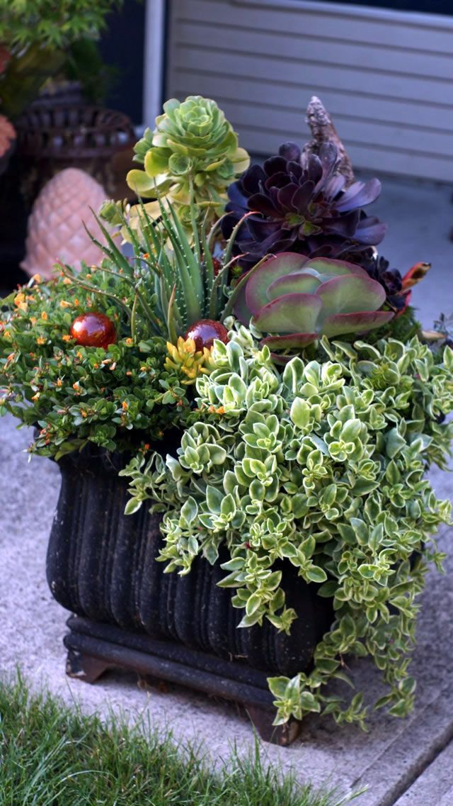 Container Creativity in BC   Fine Gardening   Deer and clay ...