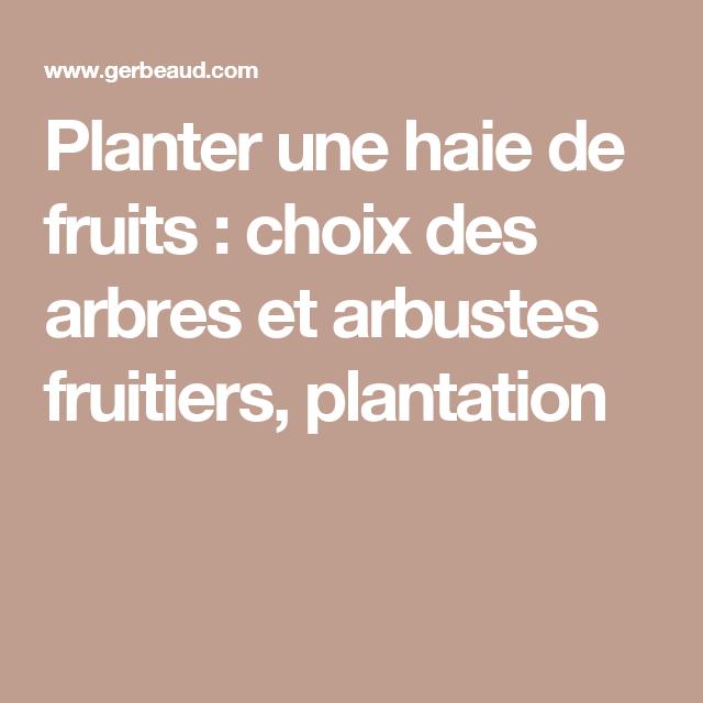 Planter une haie de fruits : choix des arbres et arbustes fruitiers, plantation