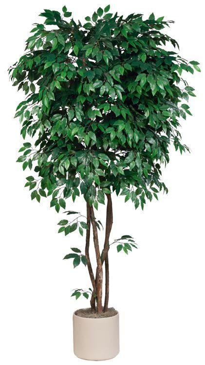 7 5 Artificial Silk Ficus Tree On Natural Dragonwood Trunks Ficus Tree Ficus Plants