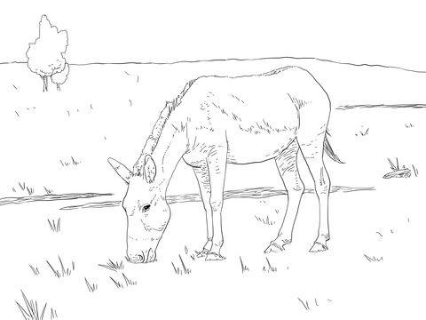 Pin von Wanda Twellman auf Coloring Horses   Pinterest