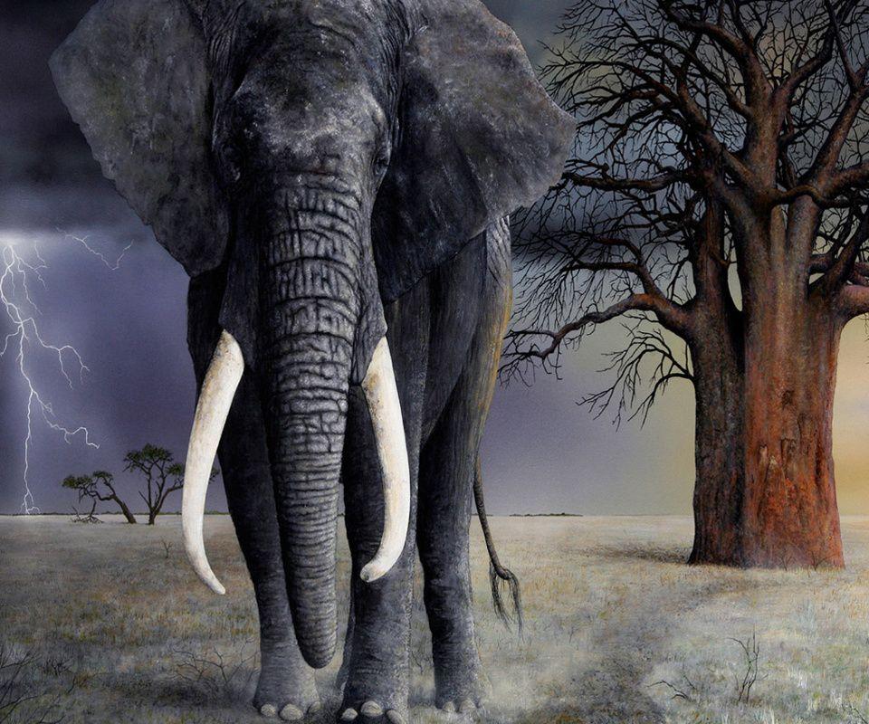 Elefante mayor