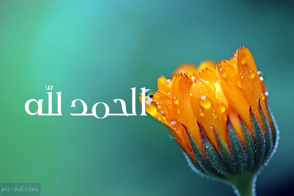 صور الحمد لله عبارات الحمد لله مكتوبة علي صور وخلفيات Marigold Flower Flower Names Types Of Flowers