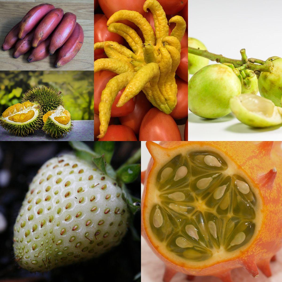 Photo of Estas son las 10 frutas más exóticas (y extrañas) del mundo
