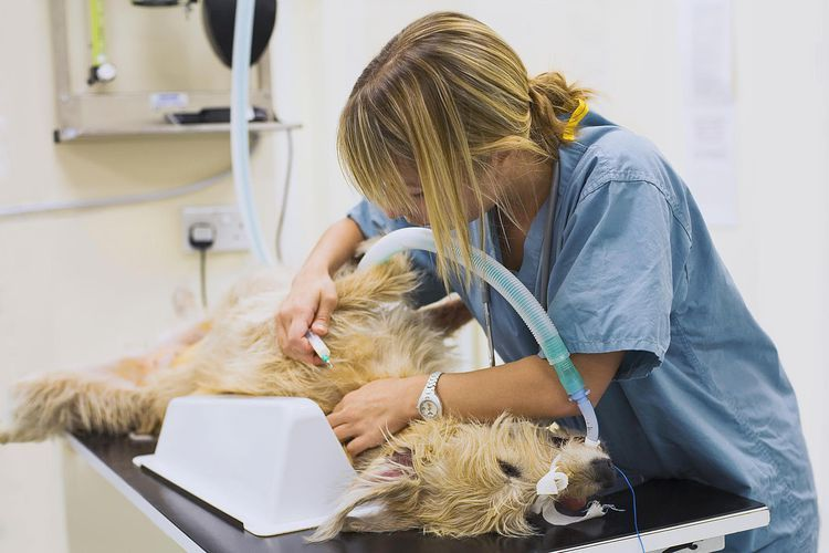 Heres a look at the pros and cons of corporate veterinary