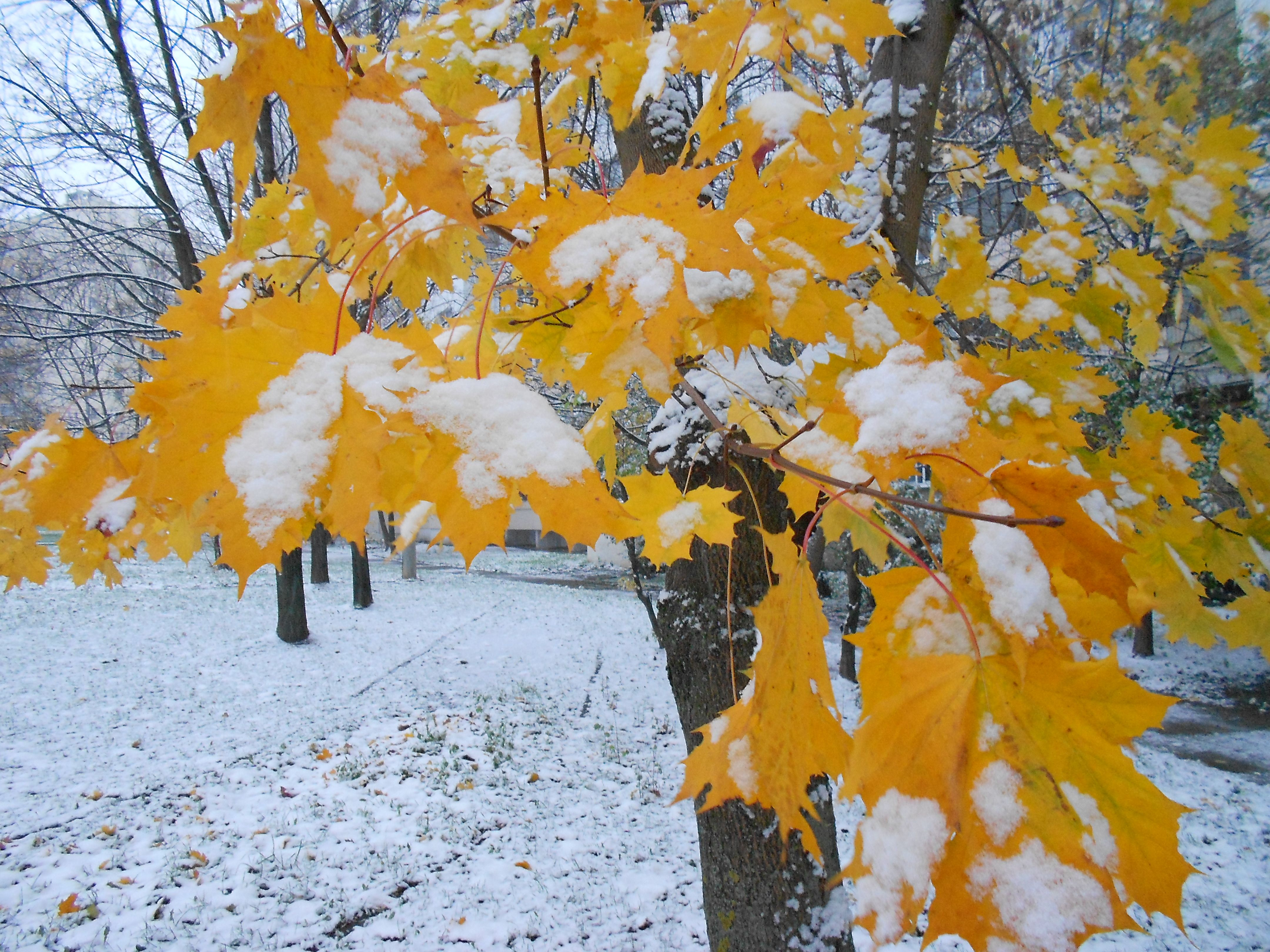 Осень картинки со снегом