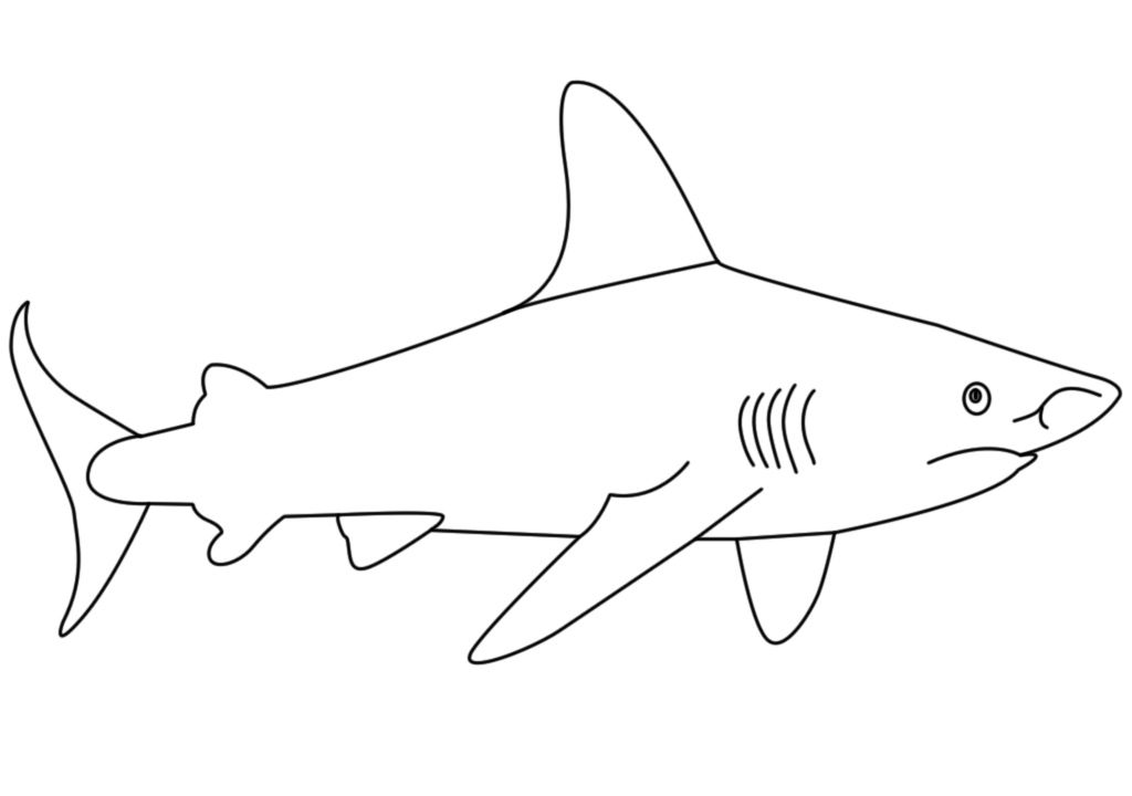Shark Shark Drawing Easy Shark Drawing Shark Coloring Pages