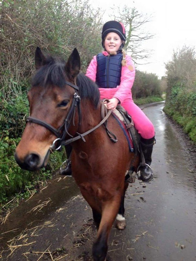 13 2 New Forest Pony For Sale In Taunton Somerset Ponies For