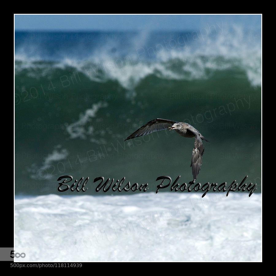 Surf's Up by wildlifephotonj. Please Like http://fb.me/go4photos and Follow @go4fotos Thank You. :-)
