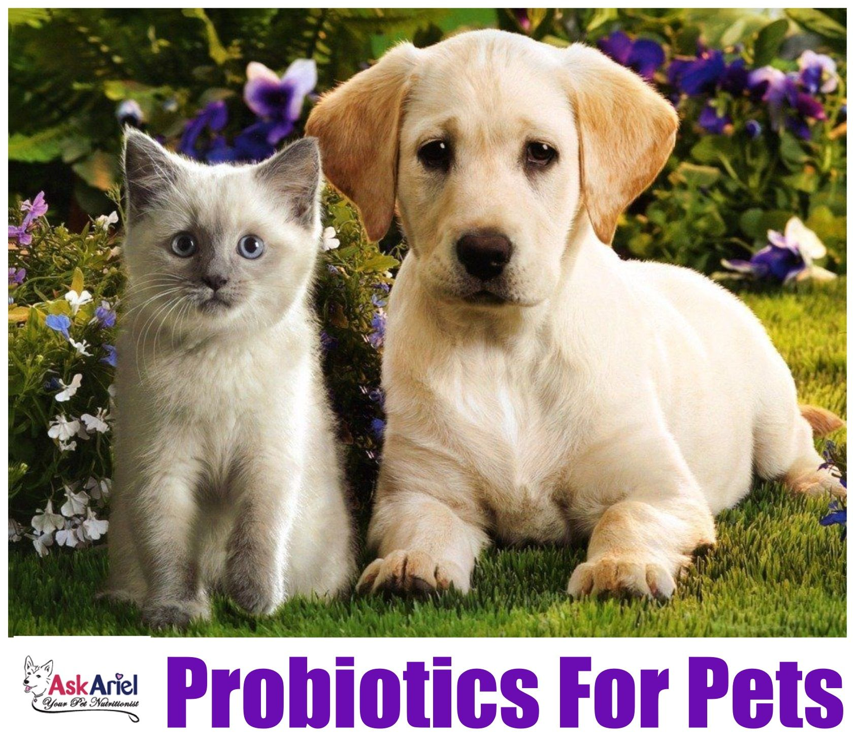 Natural Probiotics For Dogs Cats Ask Ariel Cute Puppy Wallpaper Cute Puppies And Kittens Kittens And Puppies