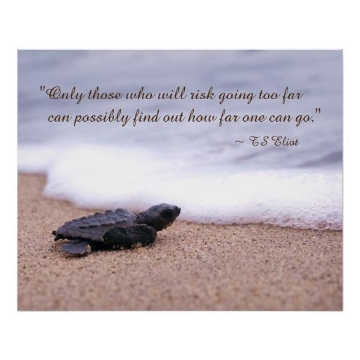 Turtle Quotes Inspiring Quote Baby Sea Turtle Sand Ocean Poster  Baby Sea Turtles .