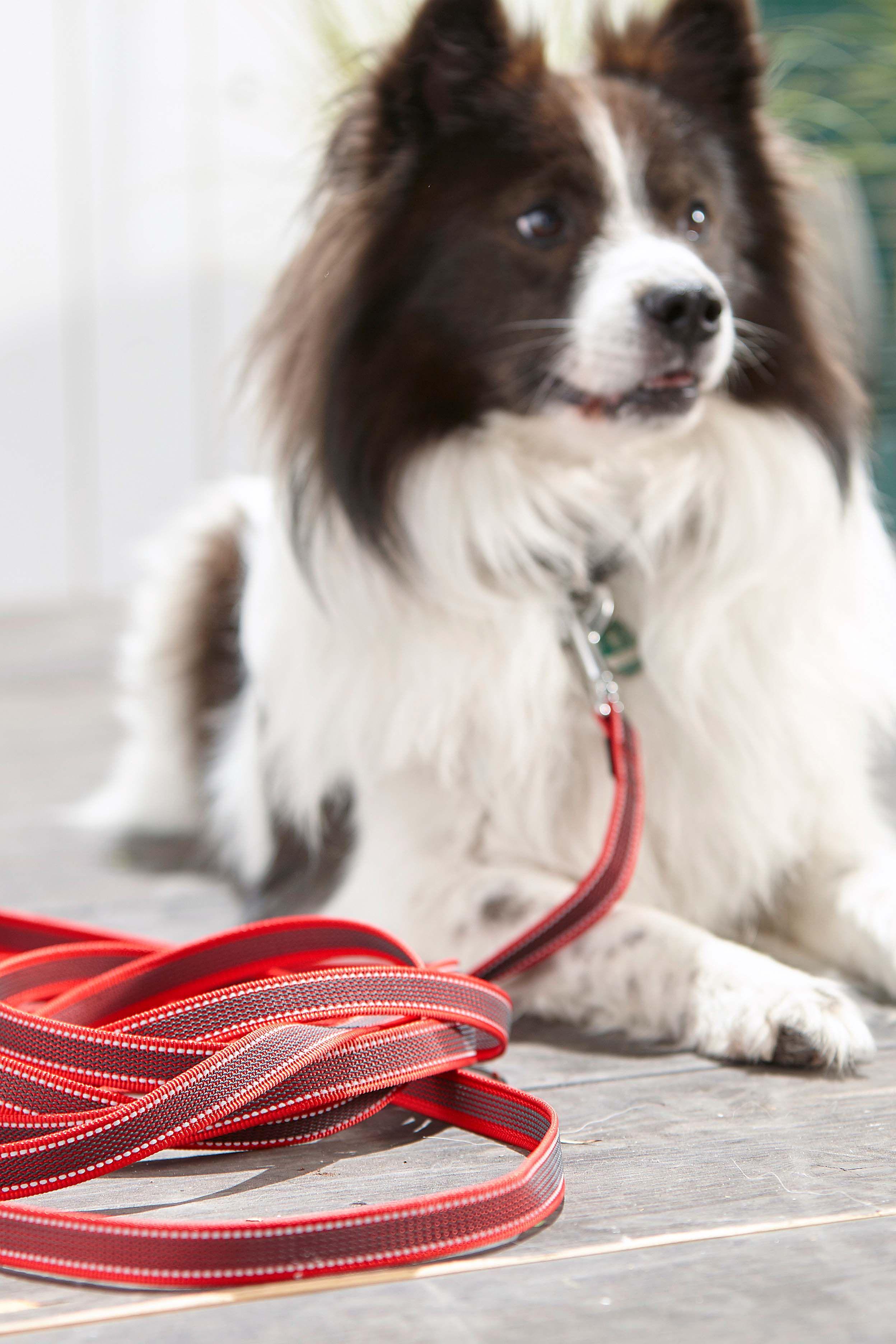 Dehner Hunde-Schleppleine Chester Breite 2 cm L/änge 5 m Rot//Schwarz