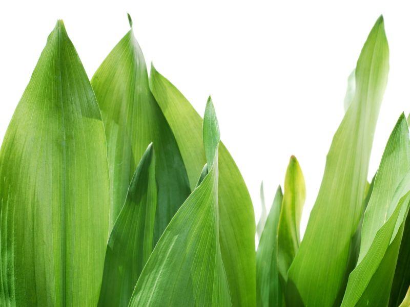 Pflanzen Furs Bad Gesucht Die 12 Besten Badpflanzen Pflanzen Furs Bad Pflanzen Badezimmerpflanzen