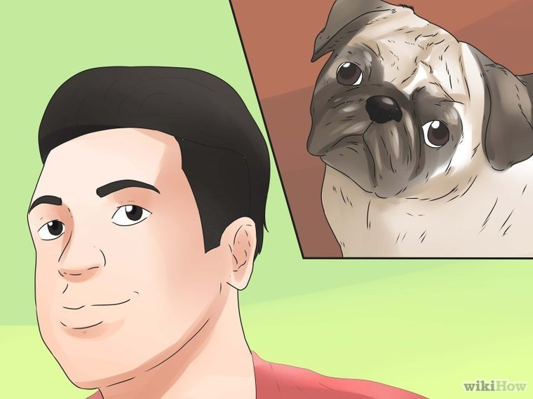 How To Live With A Pug Dog 20 Easy Steps With Pictures