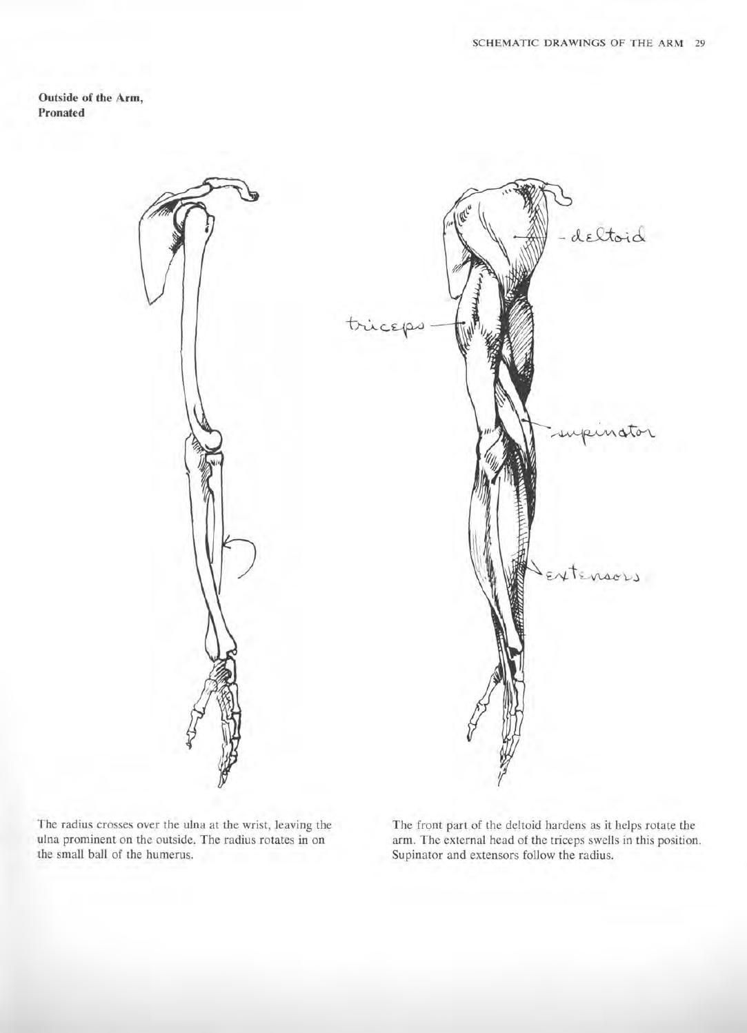 Anatomy a complete guide for artists joseph sheppard | Anatomy ...