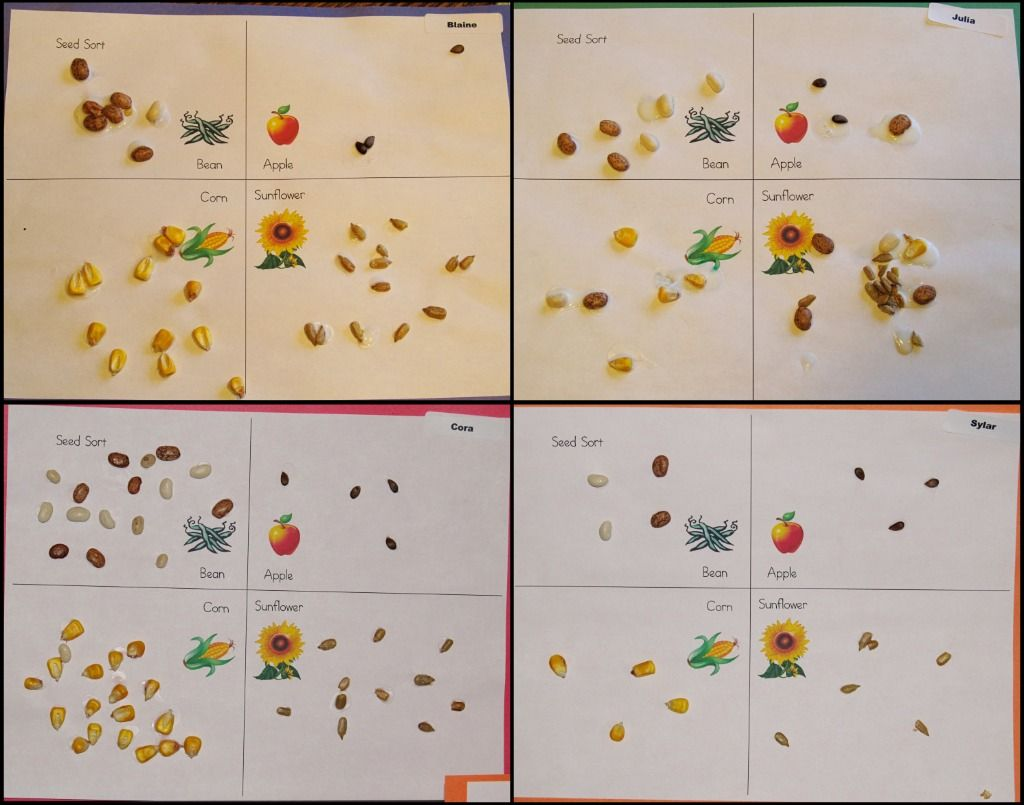 Set of symbols patterns different seeds, nuts, fruits. Set of symbols  patterns of different seeds, nuts, fruits.
