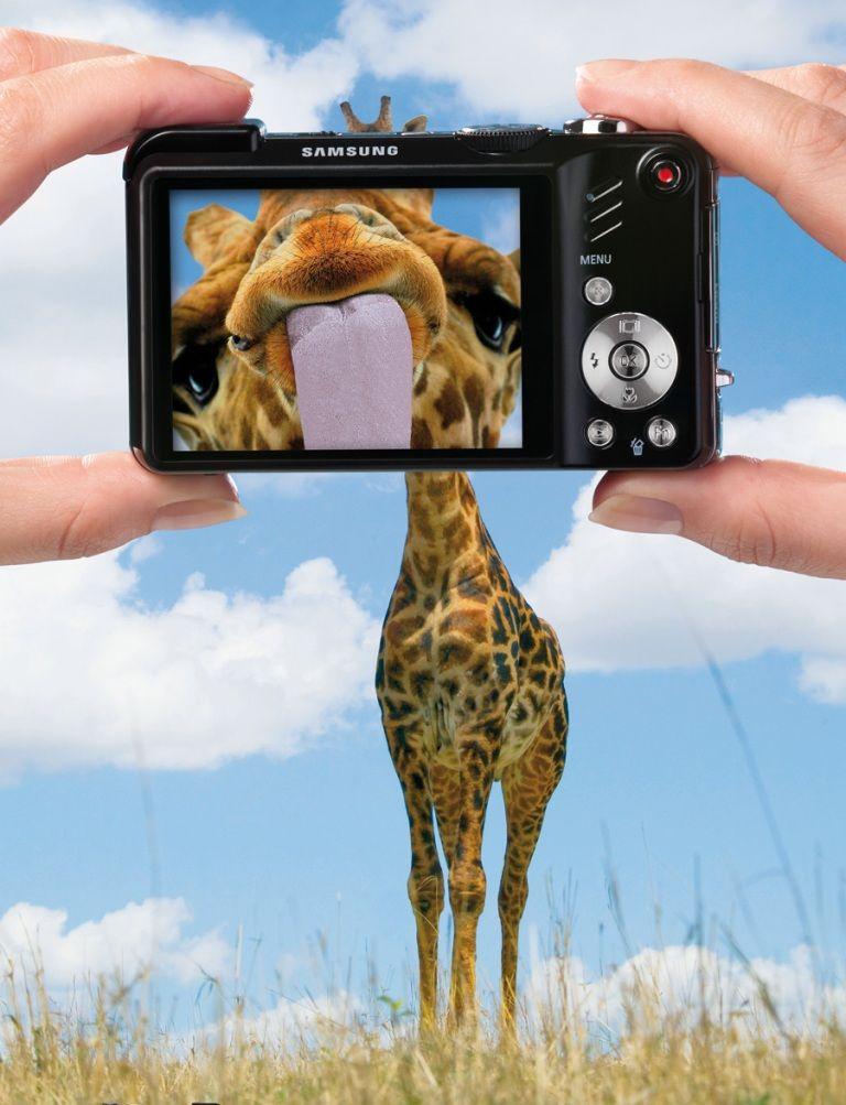 Den aldrande giraffen