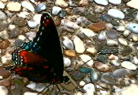 Butterfly. Picture taken by phone.