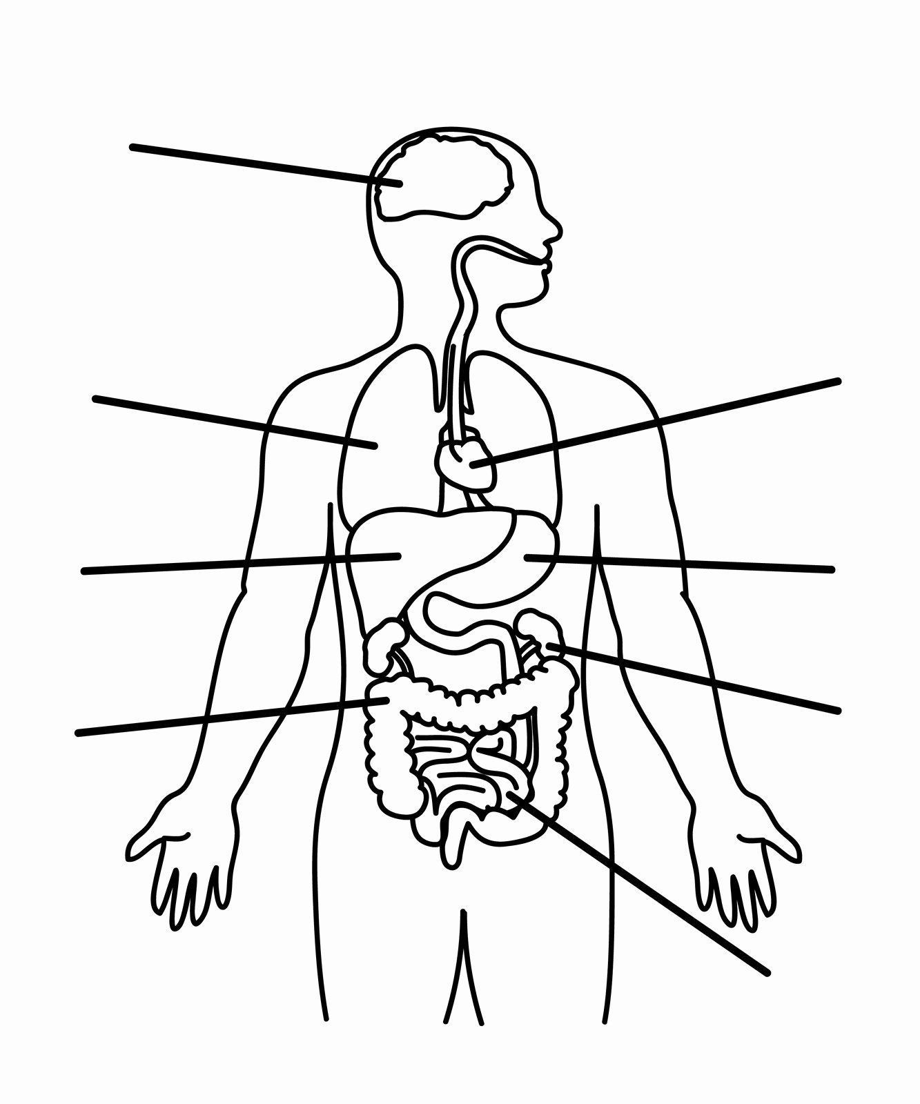 Free Human Body Coloring Pages