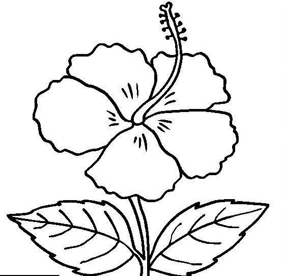 Gambar Mewarnai Bunga Sepatu Places To Visit Flower Coloring