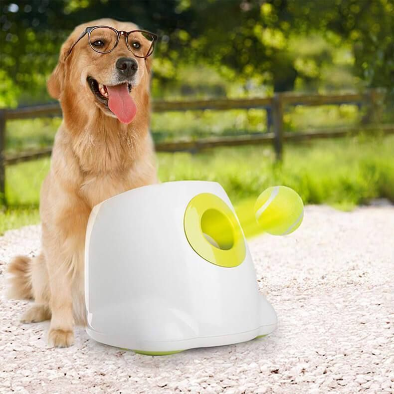 Interactive Automatic Dog Ball Launcher Coiocal In 2020 Dog