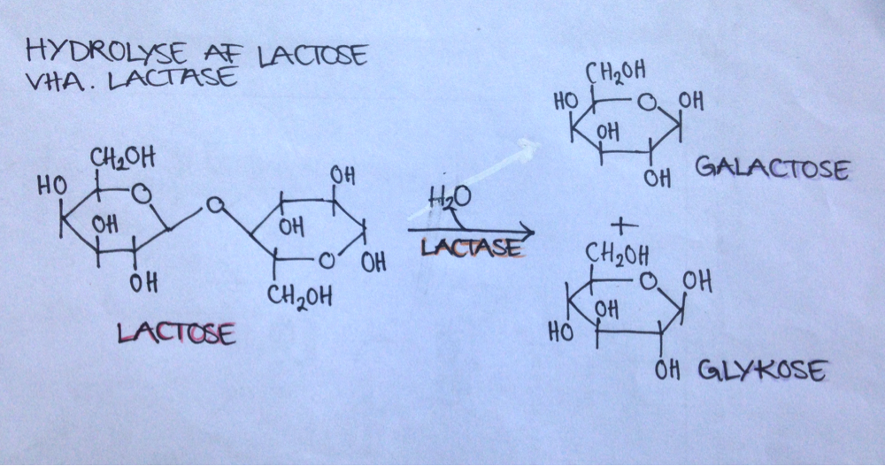parmesan laktose