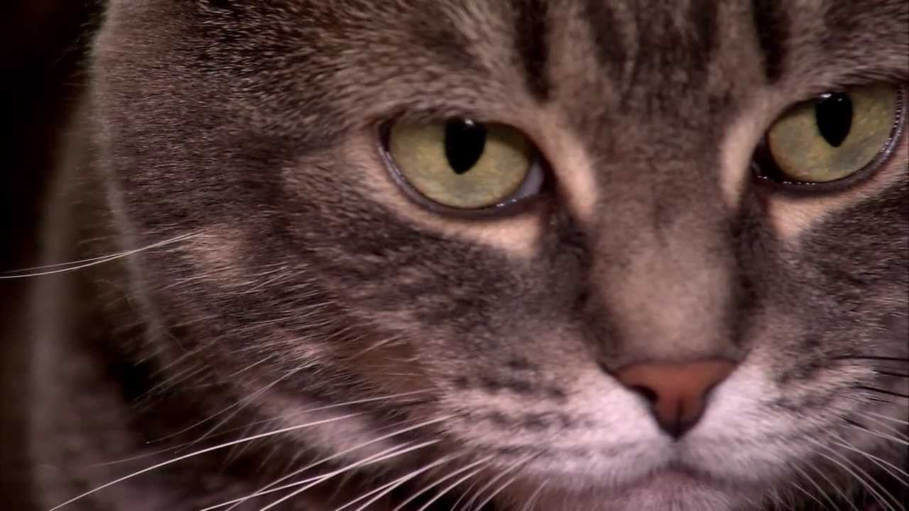 How do cats purr and why? - Nora - Extraordinary Animals - Series 2 - Earth