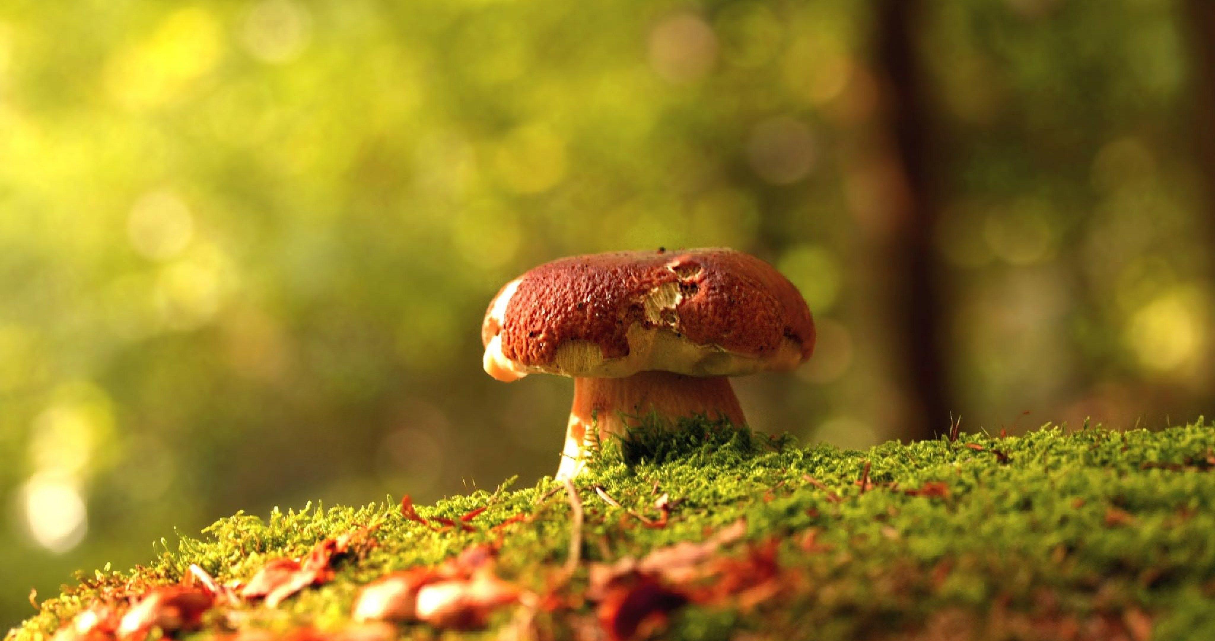High Definition Fall Wallpapers Mushrooms In Forest 4k Ultra Hd Wallpaper Ololoshenka