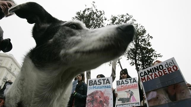 Portugal prohíbe tener mascota durante cinco años a quien maltrate a un animal