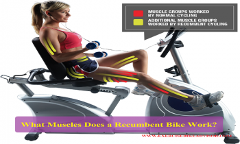 Pin On Which Muscles Does A Recumbent Bicycle Work