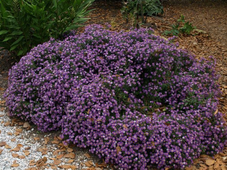 Arbusto con florecillas de color morado para el jard n for Arbusto de jardin