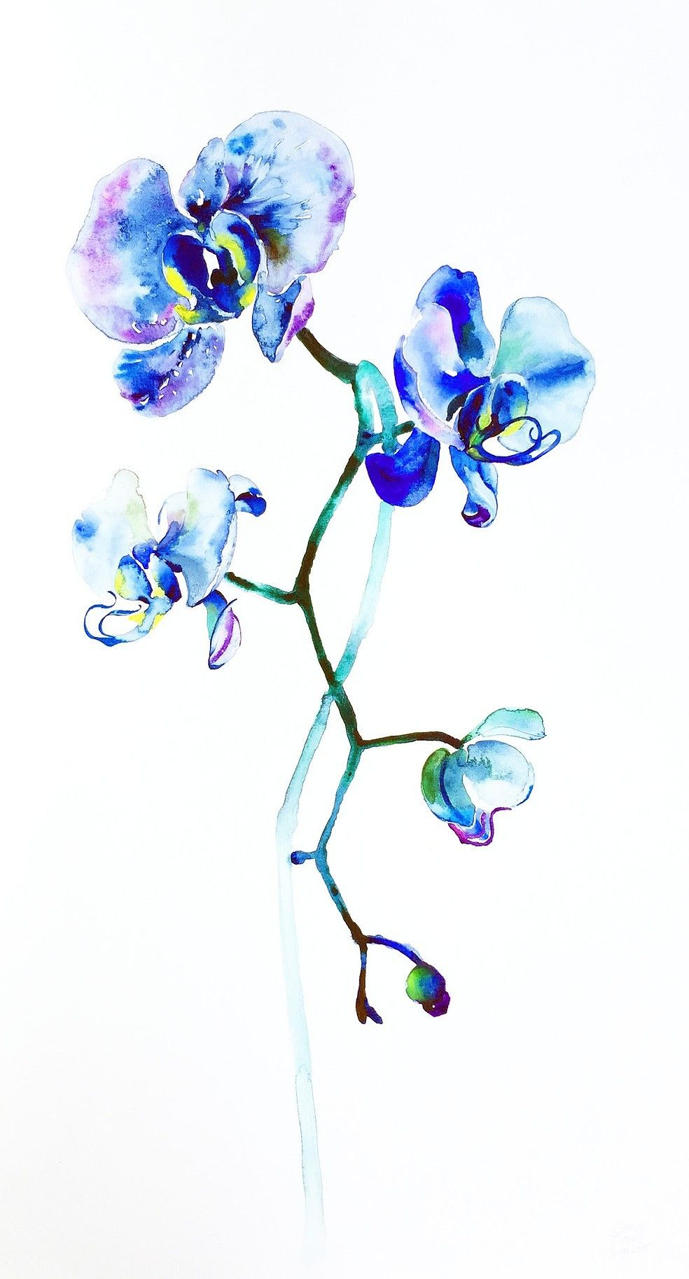 Blue Orchids Blue Orchid Tattoo Orchid Tattoo Watercolor