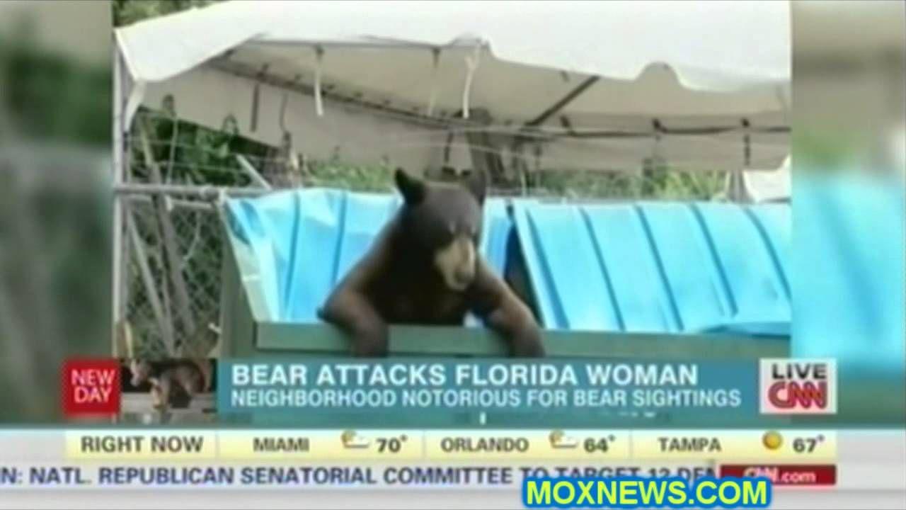 Black Bear Attacks Woman In Florida Florida, Black bear
