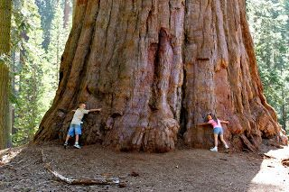 Sequoia National Forest Tree Pepper Tree Redwood Tree