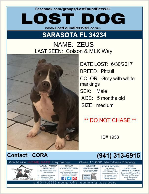 Have You Seen Zeus Lost Dog Pitbull Missing Pet Sarasota Fl 34234 Lostfoundpets941 Lostpetservices Losing A Dog Losing A Pet Service Animal