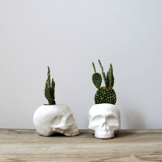 skulls and cactus