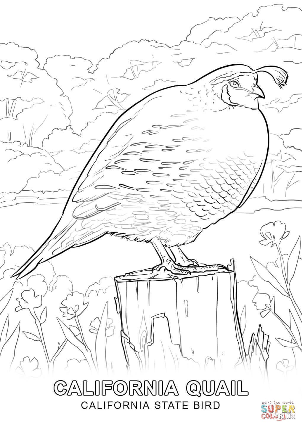 California State Bird Coloring Page From California Category Select From 27007 Printable Crafts Of Cartoons Na Bird Coloring Pages Coloring Pages State Birds
