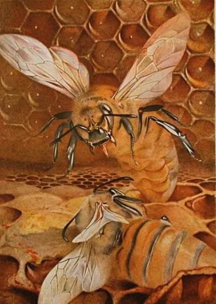 The Life of the Bee by Edward Julius Detmold, 1909.