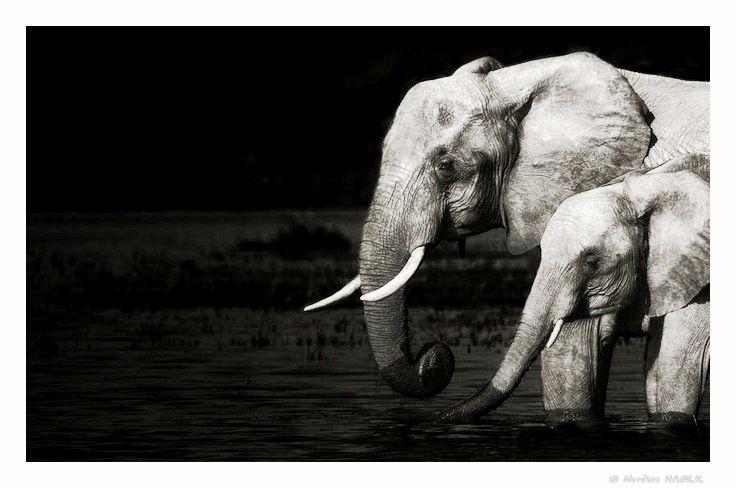 Epingle Par Sahara Nordine Sur Black White Photo Elephant Animaux Noir Et Blanc