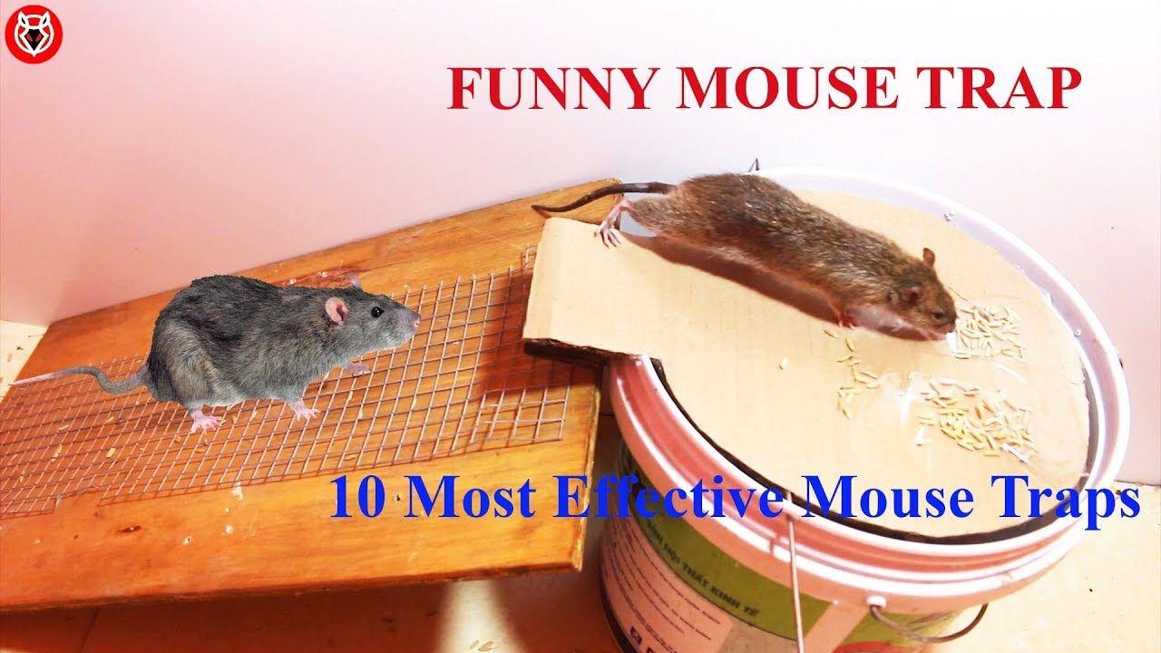 Top 10 Rat Traps Best Idea Electric Mouse Trap Water Best