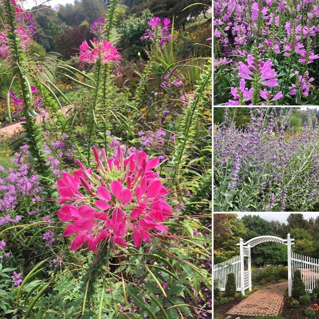 "1 Likes, 1 Comments - Nicole Rovig (@nicolerovig) on Instagram: ""The Healing Garden. #flowers #flowersofinstagram #gardens #naturelover #lavender"""