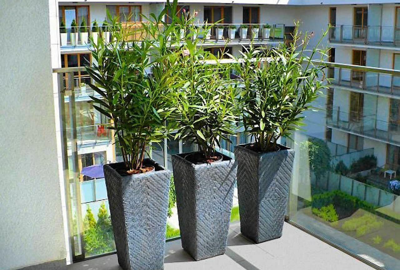 Donice W Rozmiarze Xxl Swietnie Komponuja Sie Z Roslinami Zarowno Domowymi Jak I Tymi Hodowanymi Na Balkonie Czy Tarasie Jakie Kwi Plants Garden House Design