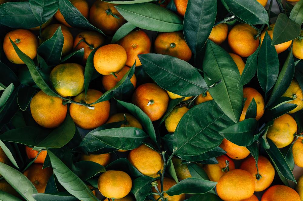 Orange Fruits Photo Free Food Image On Unsplash Fruit Homemade Marmalade Fruits Photos
