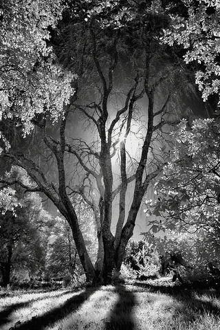 Dark Night Trees Iphone Wallpaper Mobile Wallpaper White Photography Nature Photography Pictures