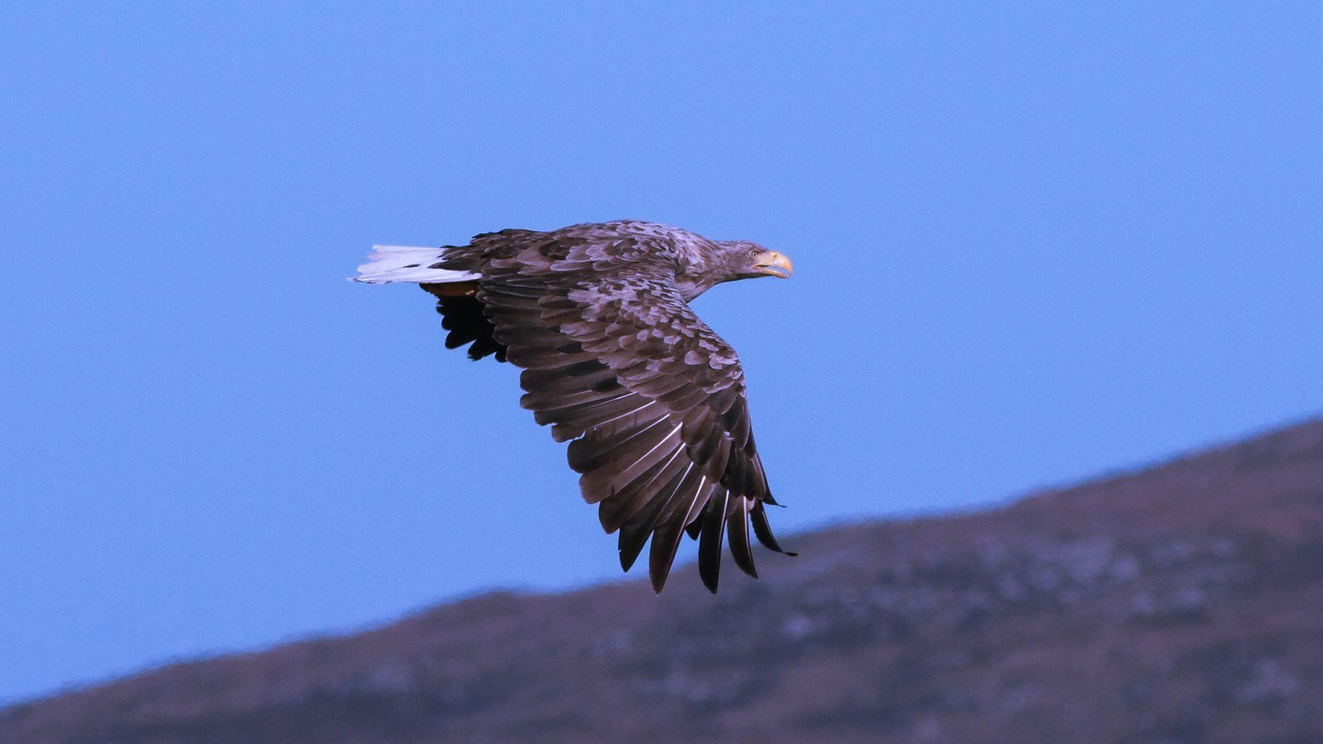 Hebridean Wildlife