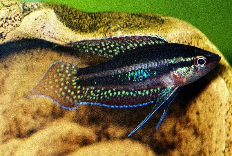 Emokiddz S Image Aquarium Fish Tank Aquarium Fish Cool Fish