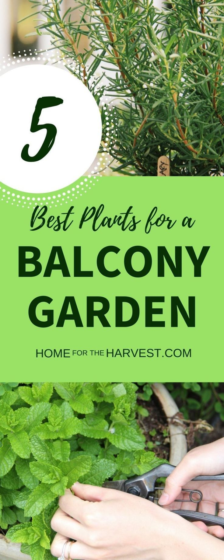 5 Best Edible Plants for a Balcony Garden | Home for the Harvest #besthomegardens    More and more people want to manage their own balcony garden sustainably. Because: organic gardening is good for the Urban Climate and biodiversity, protects our wallet and improves our ecological footprint. We have compiled the six most important tips for you about the organic balcony garden.    Buy high quality Earth for your balcony garde... #Balcony #besthomegarden #Edible #Garden #harvest #Home #Plants