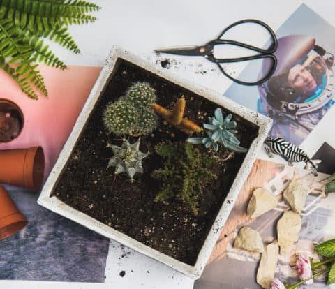 Deko mit Pflanzen – Sukkulenten Mini Garten mit wildem Tier * Wendys Wohnzimmer